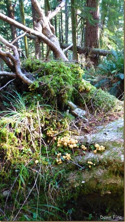 day 1 mushroom drive_004