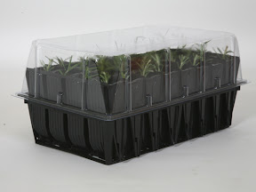 Rapid Rootrainers - with propagation lid