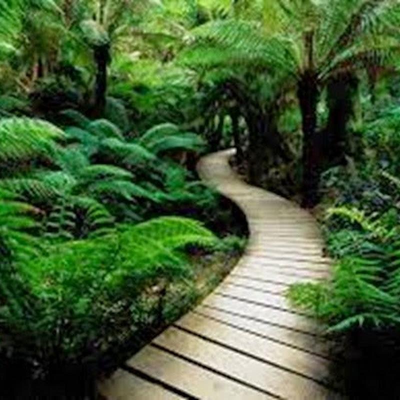 I migliori temi Blogger per creare un Blog dedicato alla Natura.