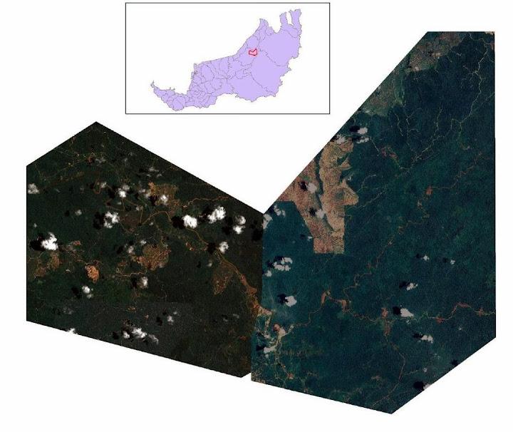 図1:画像の対象エリアを含むサラワクの地図及び、TubauImage(西部)とJelalongImage(東部)のRGB合成イメージ