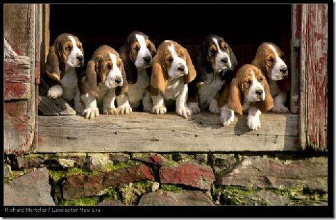 perros divertidos (2)