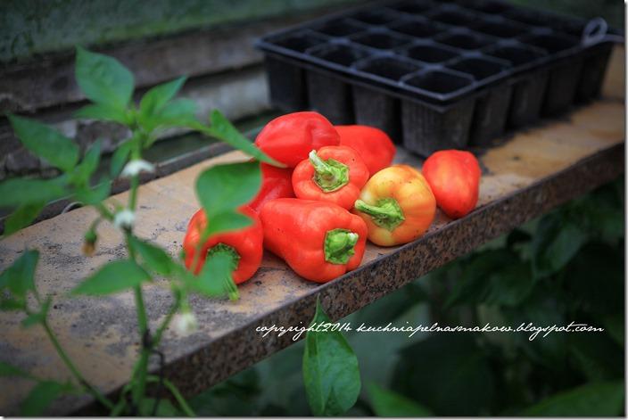 czerwona papryka  (3)