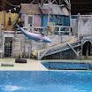 Boudewijn Seapark-012.JPG