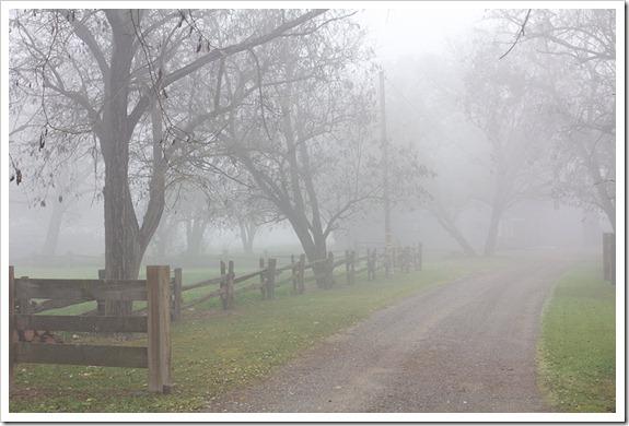 111220_fog_driveway