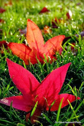 caucriauville automne 012