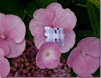 farfalle in giardino (5)