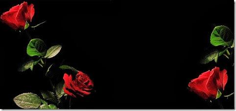 rosas brujas
