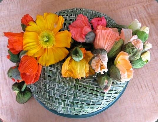 poppies 10006468_594426937318728_811924839_n ellen seagraves chic florals