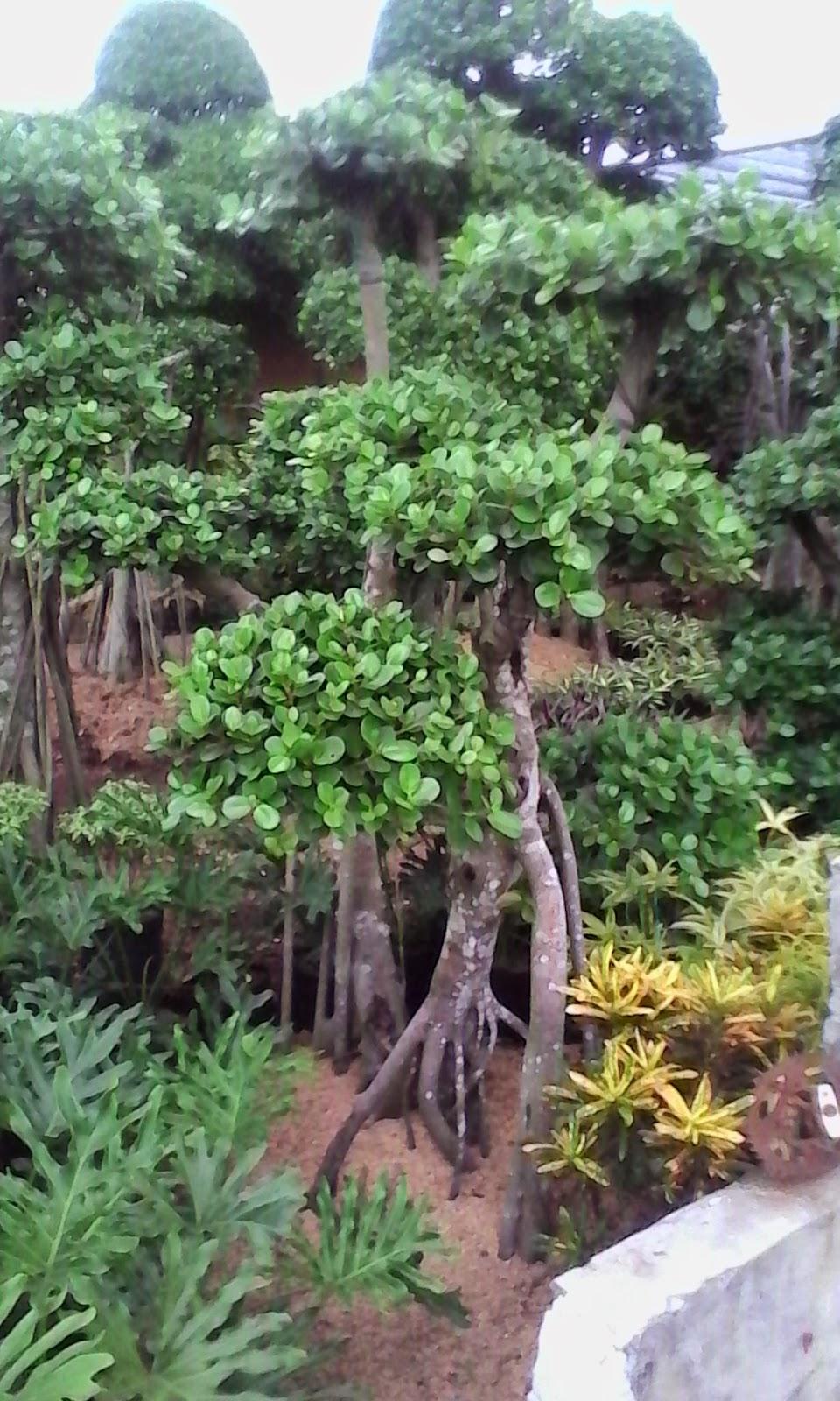 berbakat taman landscape the best garden maker bonsai