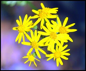 04 - Spring Wildflowers - X2 - can't ID