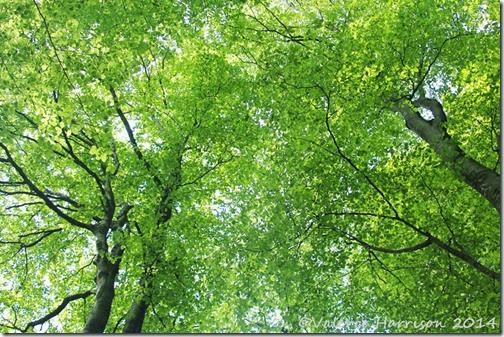 4-trees