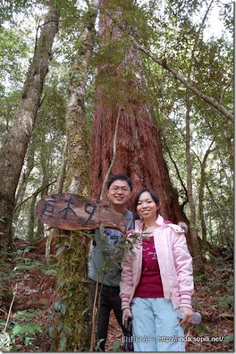 司馬庫斯-day2-巨木9
