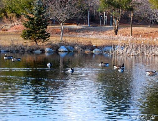 8. winter pond-kab