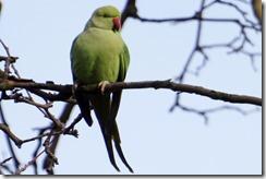 paris 2012 parc montsourris parrot 123012 00000