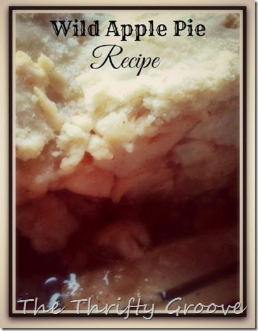 Wild apple pie recipe @ TTG