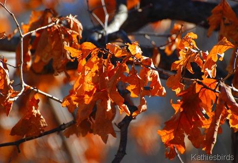 27. golden oak-kab