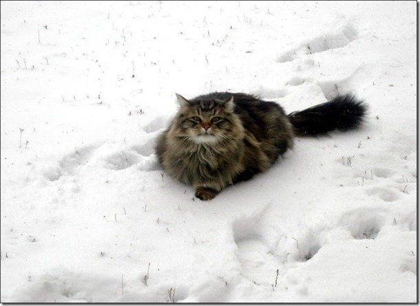 cats-play-snow-18