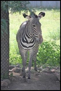 Zoo5 070