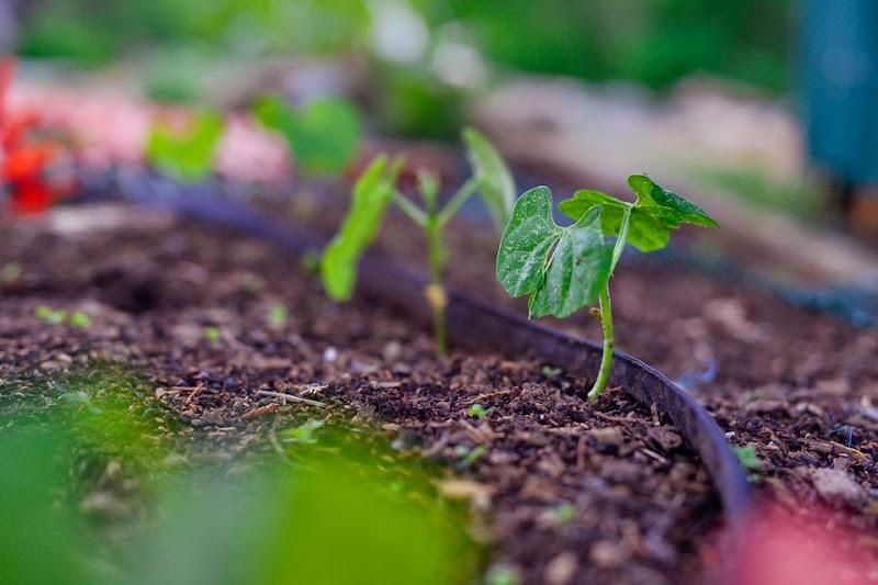 garden-11310