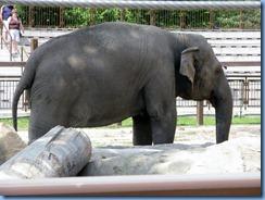 0297 Alberta Calgary - Calgary Zoo Destination Africa - Eurasia - Asian Elephant - Swarna