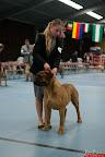20130510-Bullmastiff-Worldcup-0817.jpg