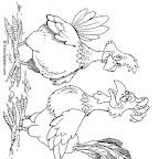 gallo-y-gallina-720.jpg