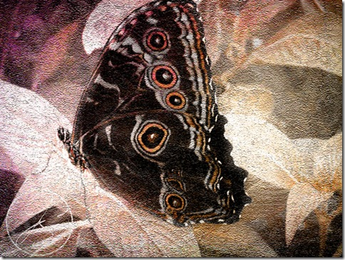 Butterfly_After
