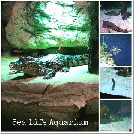 Many Waters Mall of America Sea Life Croc Eel Fish