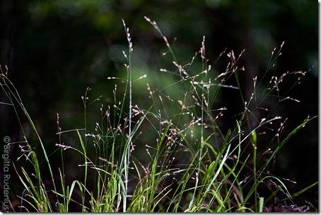 nature_20121007_grass
