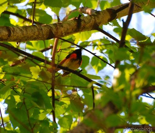 1. Redstart-kab
