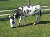 2013.08.20-015 âne dans la mini-ferme