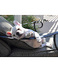 Never leave companion animals in the car or anywhere without shade, water and ventilation