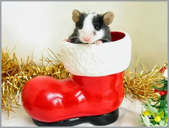 Cute-Christmas-Animals-33-630x476