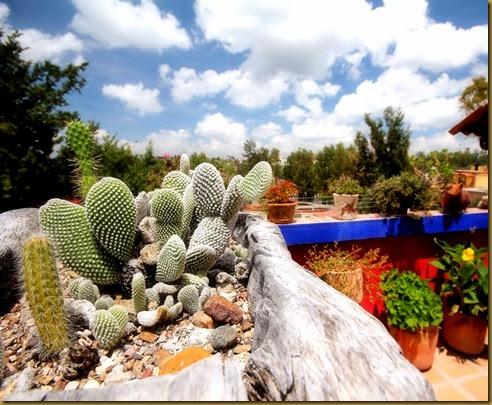 joe cactus
