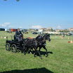 giostra dei cavalli 080.jpg