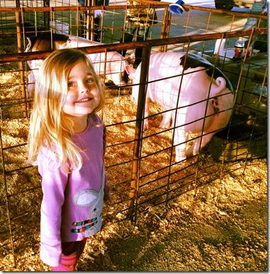 pig show 021913 (6)