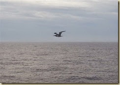 20141210_bird escort (Small)