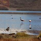 Arica - Parque Nacional Lauca  (43 de 48).jpg
