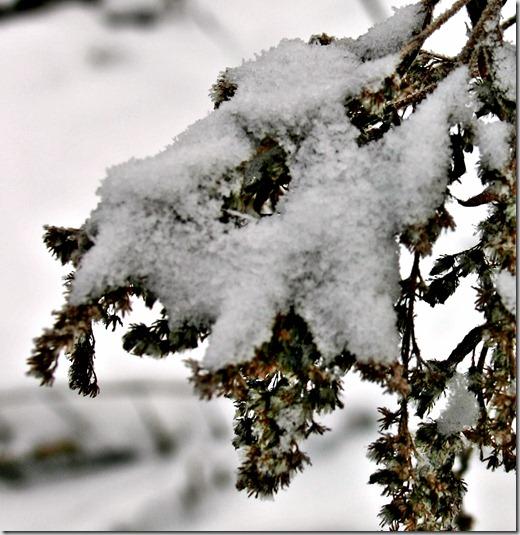 Macro tørre m snø