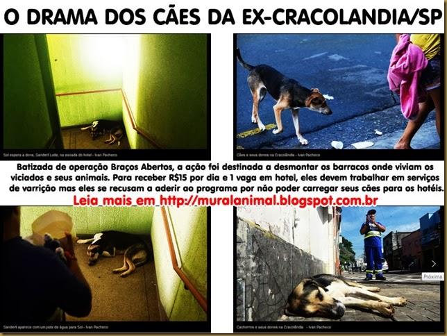 caes_cracolandia3