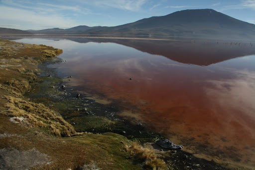 Laguna Colorada