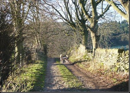 frosty walk6