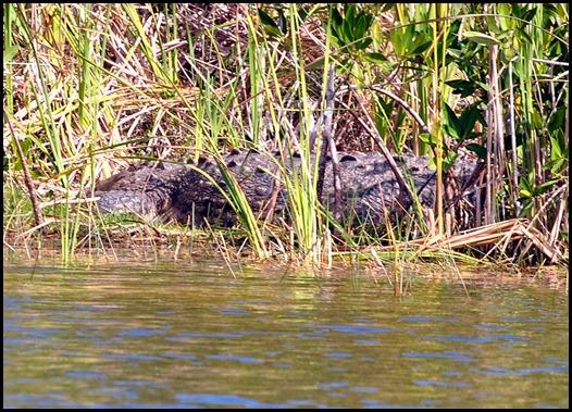 13d - last pond - croczilla