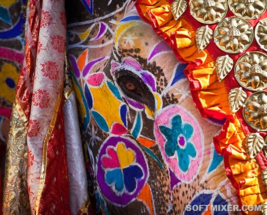 elephant-festival-jaipur-india