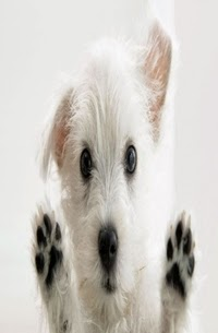 Adestramento de Cães, por PetDog