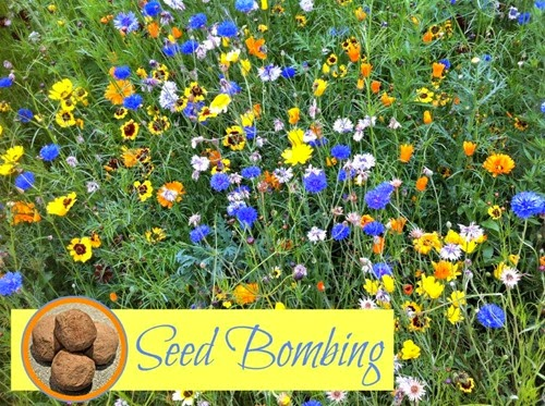 How-to-Make-Seed-Bombs-Recipe-for-Kids