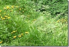 birks wild flowers