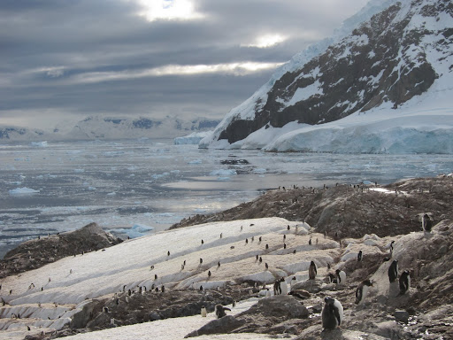 "Our ""audience"" of Gentoo Penguins lining the hills."