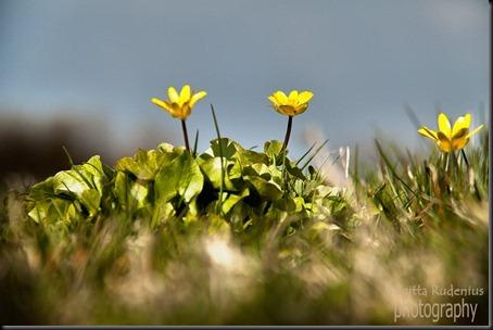 blom_20120423_svalort