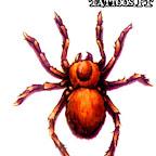 spiders-07.jpg